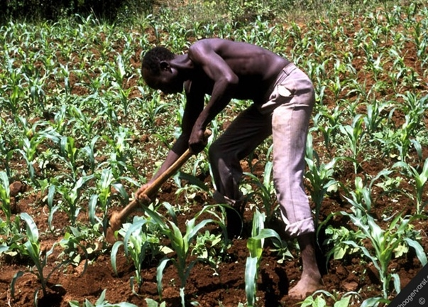 Do Agric It pays